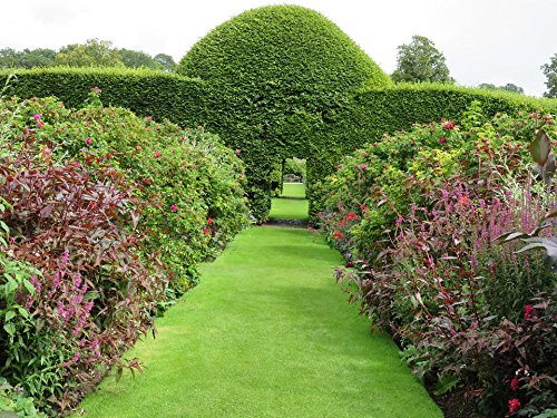 Home Comforts Peel-n-Stick Poster of Summer Topiary Hedge Garden Outdoor Green Shape Poster 24x16 Adhesive Sticker Poster Print