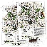 Seed Needs, White Yarrow (Achillea millefolium) Twin Pack of 500 Seeds Each