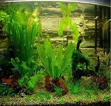ADB Inc caliente venta 300pcs Acuario Hierba semillas (mezcla) agua Acuático Planta Semillas 15 tipos: Amazon.es: Jardín