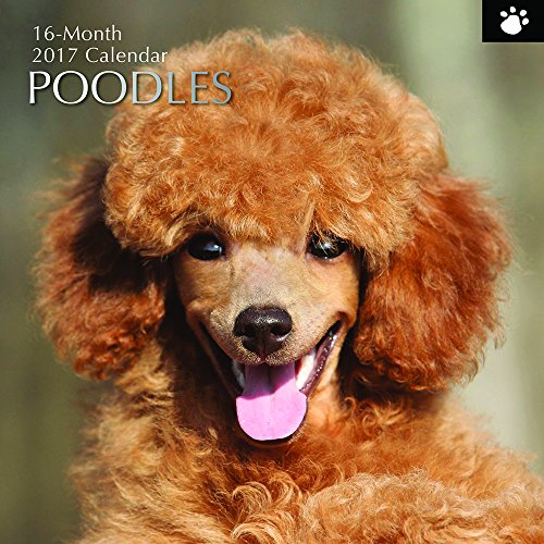 "Dog Breeds - Poodles 2017 Monthly Wall Calendar, 12"" x 12"""