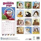 Guinea Pig Calendar - Cute Animal Calendar - Calendars 2018 - 2019 Wall Calendars - Animal Calendar - Guinea Pigs 16 Month Wall Calendar by Avonside