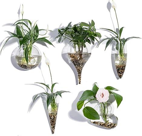 Knikglass Juego De 5 Jarrones De Cristal Geométricos Para Plantas De Agua O Flores Montado En La Pared De Cristal Transparente Amazon Es Hogar
