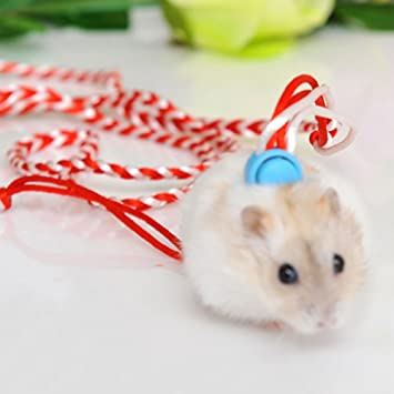 Syrian hamster gerbil rat mouse chinchillas guinea pig squirrel pet syrian hamster gerbil rat mouse chinchillas guinea pig squirrel pet harness with leashes adjustable publicscrutiny Image collections
