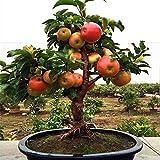 Very Rare Dwarf Apple Tree Sweet Fruit Planted Fruit Trees Seeds Indoor Garden