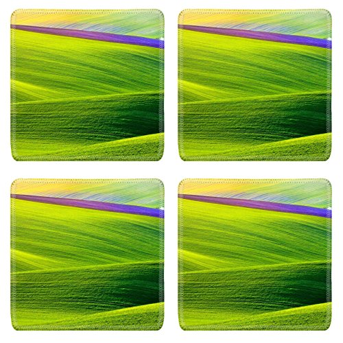 msd-natural-rubber-square-coasters-set-of-4-image-of-field-green-landscape-meadow-nature