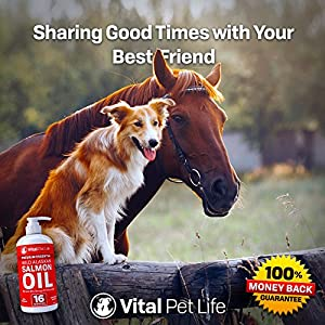 horse supplies online