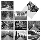 M2313 Tree Lines: 10 Assorted Thank You Note Cards Featuring Black-and-White Photography of Paths Through Trees, w/White Envelopes.