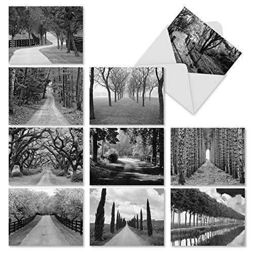 M3313 Tree Lines: 10 Assorted Blank All-Occasion Note Cards Featuring Black-And-White Photography Of Paths Through Trees, w/White Envelopes.