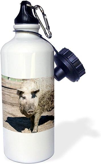 Hungary 21 oz Eastern Europe-Sports Water Bottle Multicolor 21oz wb/_189017/_1 3dRose Mangalitsa Pig