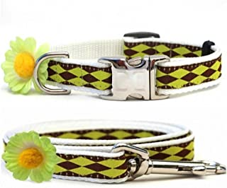 "product image for Diva-Dog 'Gerber Daisy' Lime Green 5/8"" Wide Custom Dog Collar with Plain or Engraved Buckle, Matching Leash Available - Teacup, XS/S"