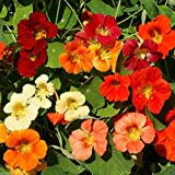Nasturtium Jewel Mix,( tropaeolum majus)100 seeds,flowers and seeds are edible