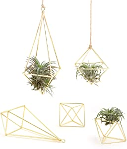 5 Pack Air Plant Holder Metal Himmeli Décor Modern Geometric Tillandsia Hanger 2 Pcs Hanging Airplants Planter 3 Pcs Mini Tabletop Air Fern Display Rack (with Rope) for Home Office, Gold (2 Styles)