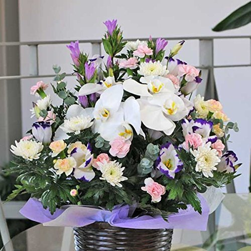 蘭の花を使った お供え お悔やみアレンジメント (白を中心に, Mサイズ) B00VE8C6VS Mサイズ|白を中心に 白を中心に Mサイズ