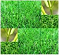 1 LB x Bermuda Grass Seed - Lawn Grass Seeds - Uses: Ideal for lawns, golf courses, athletic fields, and other turf applications - WARM SEASON GRASS - HARDY ZONES 7 - 10