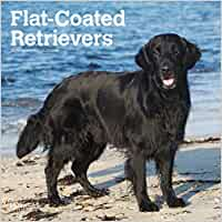 Flat Coated Retrievers 2019 Square Wall Calendar: Amazon