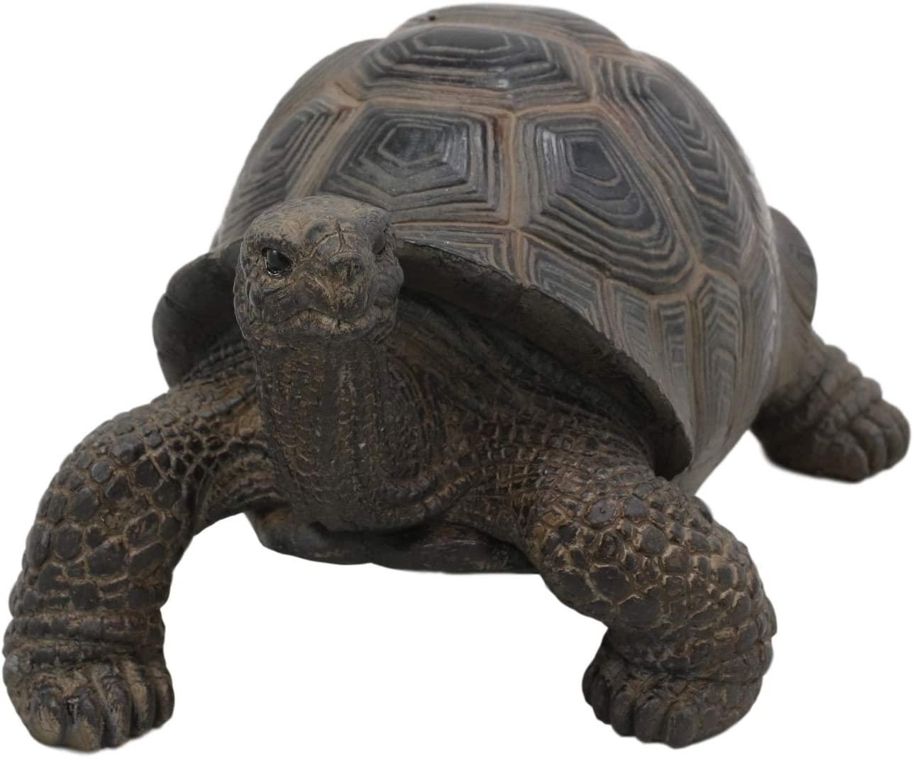 "Ebros Lifelike Galapagos Tortoise Statue 6.5"" Wide Taxidermy Replica Feng Shui Talisman of Stability and Fortune Lucky Turtle Figurine Decorative Zen Turtles Tortoises"