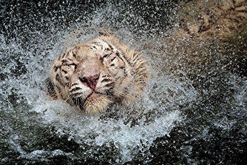 wet cat poster