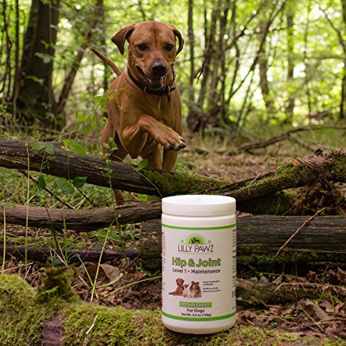 Natural Glucosamine for Dogs 500mg Hip and Joint Supplement with Chondroitin, Yucca Schidigera, Omega 3 & 6 and Vitamins C & E - 90 Chews - Arthritis Pain Relief, Mobility, Anti-inflammatory (Yucca Anti Inflammatory)