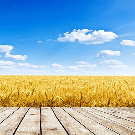 Golden Wheat Field Blue Sky And White Clouds TV Background Wall Paper 3D Wall Murals Photo Wallpaper Roll Living Room Home Decor,350 * 245cm: Amazon.es: Bricolaje y herramientas
