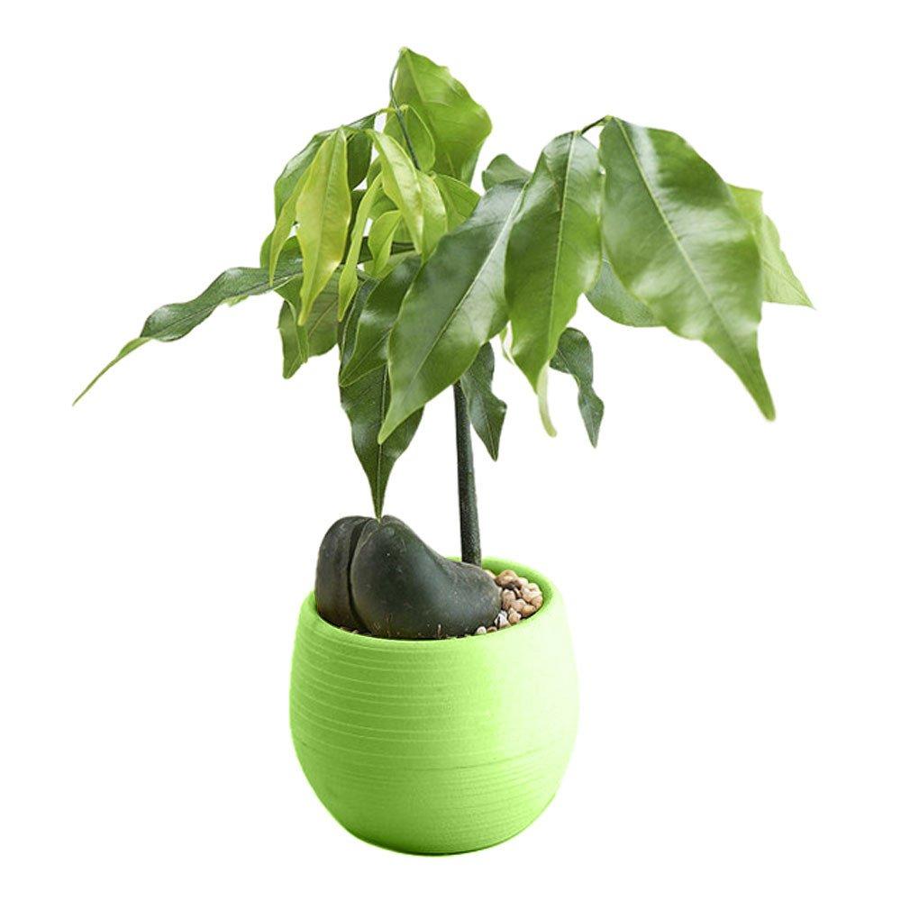 Iusun Mini Round Plant Flower Planter for Succulent Plants Air Plants Cacti Artificial Plants Storage Organizer Patio Home Office Garden Yard Rectangle Indoor/Outdoor Decor Hot (Green)