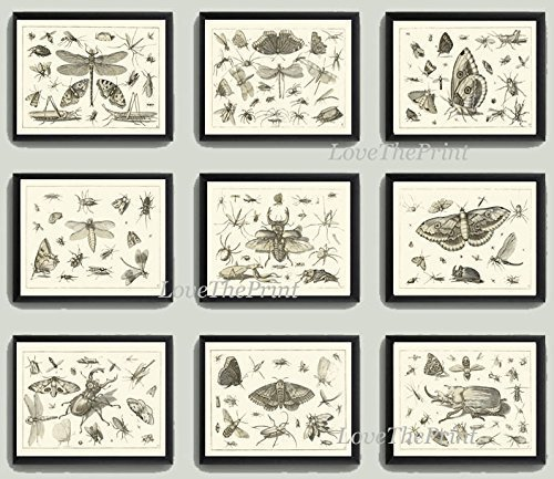 Art Print SET of 9 Beautiful Antique Dragonfly Butterfly Beetle