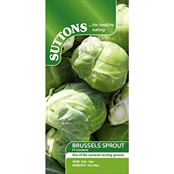 Suttons Seeds 153245 Brussels Sprouts F1 Content Seeds (Pack of 45)