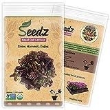 CERTIFIED ORGANIC SEEDS (Apr. 1,100) - Regal Oak Lettuce - Heirloom Lettuce Seeds - Non GMO, Non Hybrid Vegetable Seeds - USA
