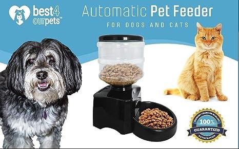 Mejor 4 comederos automáticos para mascotas – dispensa la parte correcta de comida para gato o