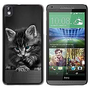 Qstar Arte & diseño plástico duro Fundas Cover Cubre Hard Case Cover para HTC DESIRE 816 ( Cute Paw Kitten Whiskers Grey Baby Cat)