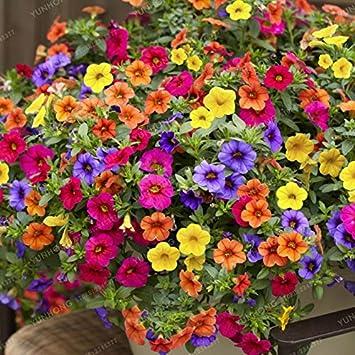 100 unids/pack que las semillas de petunia color mezclado olas hermosas flores por planta: Amazon.es: Jardín