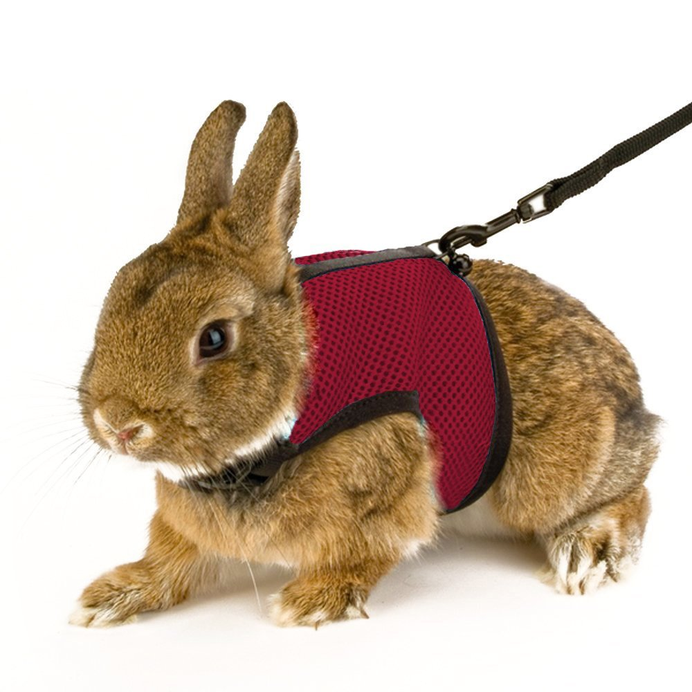 Red 1pcs Calunce Soft Rabbits Harness with Leash (Red 1pcs)