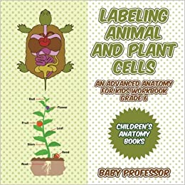 Labeling Animal and Plant Cells - An Advanced Anatomy for Kids ...