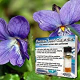 Sweet Violet Seeds (Viola odorata) 40+ Culinary Medicinal Flower Seeds + FREE Bonus 6 Variety Seed Pack - a .95 Value! Packed in FROZEN SEED CAPSULES for Growing Seeds Now or Saving Seeds for Years