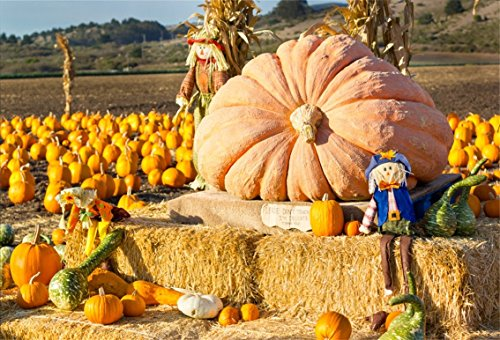Fall Scene Setters - CSFOTO 7x5ft Pumpkin Backdrop Patch Giant