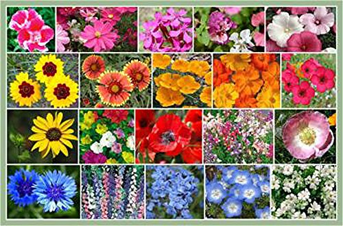 10,000 - All Annual Wildflower Seeds - All Zones Annual Wildflower Seed Mix
