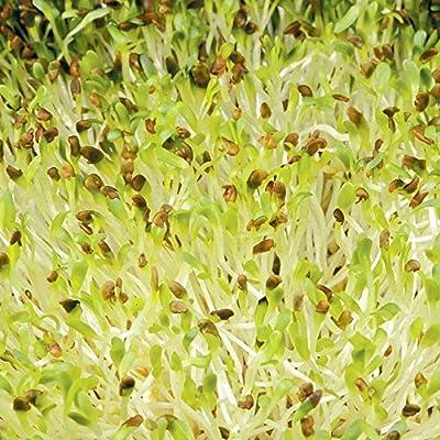 David's Garden Seeds Sprouts Alfalfa SL8889 (Green) One Ounce of Non-GMO, Open Pollinated Seeds : Garden & Outdoor
