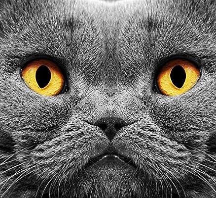 ZZXSY Rompecabezas para Adultos 1000 Piezas Gato Asustado con Ojos ...