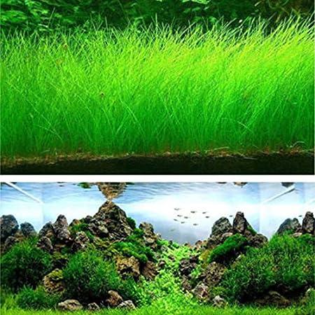 TOPmountain Decoración de semillas de hierba de agua 1000 unids ...