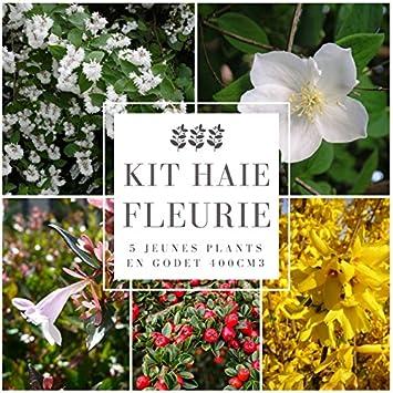 Kit Haie Fleurie 5 Jeunes Plants En Godet 400cm3 Amazon Fr Jardin