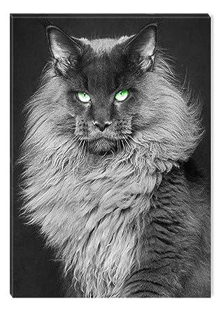Startonight Cuadro sobre Lienzo en Blanco y Negro Gato, Impresion en Calidad Fotografica Enmarcado y Listo Para Colgar Diseño Moderno Decoración Formato ...