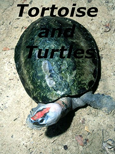 tortoise and turtles (Difference Between Turtle And Tortoise In English)