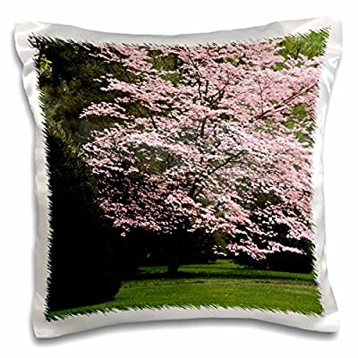 Danita Delimont - Trees - Dogwood tree, Audubon Park, Louisville, Kentucky, USA - US18 AJE0526 - Adam Jones - 16x16 inch Pillow Case (pc_144431_1)