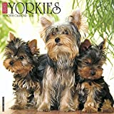 2016 Just Yorkies Wall Calendar