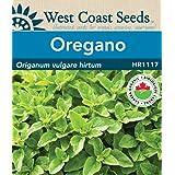 Oregano Seeds - Greek Organic