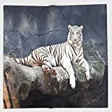 Cotton Microfiber Hand Towel,Tiger,Albino Cat Sitting on Rock Sublime Nature Marvelous Animals Endangered Species,Slate Blue White,for Kids, Teens, and Adults,One Side Printing