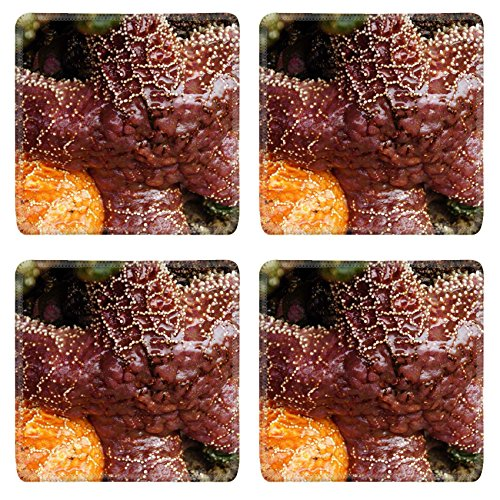 Liili Square Coasters Purple sea star Pisaster ochraceus