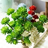 MuLuo 200pcs/Bag Houseleek Succulent Seeds Beauty Potted Flowers Seeds for Home Garden
