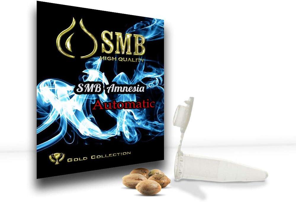 Smb Seeds Amensia Silver. Semillas Feminizadas Autofloreciente. Pack de 3 semillas + regalo sorpresa.
