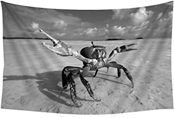 Amazon Com Ghost Crab Beach Ocypodinae Sea Clouds Animals Wall Tapestry Art For Home Decor Wall Hanging Tapestry 60x40 Inches Black And White Home Kitchen