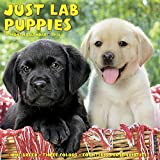 Just Lab Puppies 2018 Calendar